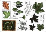 Seasonal flora    per vel
