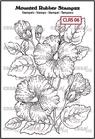 Hibiscus    per stuk