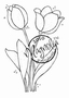 Two Tulips   per stuk