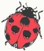 Ladybug   per stuk