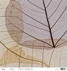 Skelleton leaves