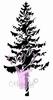 Spruce  /  Den   per stuk