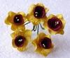 Yellow / Deep Red Daffodil   setje van 5