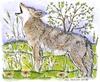 Howling Coyote   per stuk
