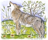 Howling Coyote