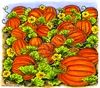 Pumpkin Field   per stuk