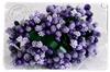 Violets   per bosje