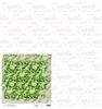 Green Romance  15 x 15   per vel