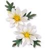 Mini Daisy   per set