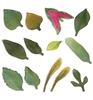 Garden Leaves   per set