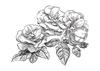 Bloemen    per stuk