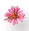 Gazania Flower   per set
