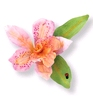 Cattleya Flower