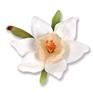 Narcissus Flower Paperwhites   per set