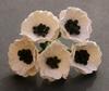 Poppy WhiteFlowers   setje van 5