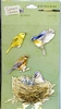 3-D stickers: Feathered Friends   per vel
