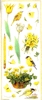 Big Sticker: Naturally Yellow   per vel