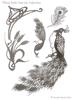 Tiffany Style Peacocks    per stuk