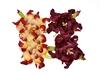Gardenia 5 cm Cream and Burgundy   per set