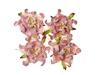Gardenia 5 cm Pink and White