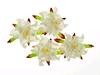 Gardenia 5 cm White   per set