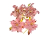 Gardenia 5 cm Pink and White   per set