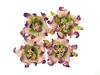 Gardenia 5 cm Purple and Green   per set