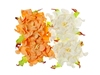 Gardenia 7 cm Peach and White   per set