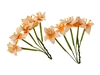 Stemmed Lily 2-tone Peach