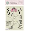 Echinacea  Veer & Moon 06