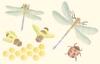 Insecten   per stuk