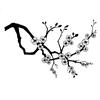Cherry Blossom   per stuk