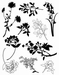 Planten negatief + positief Clear stempelset   per vel