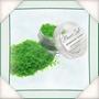 Flower Soft Shamrock Green
